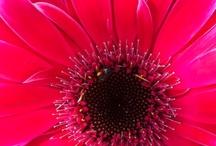 Pretties: Pink / by Lori Ann