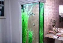 aquarioum