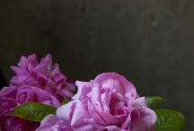 photo-inspiration-still life / by SimonaRizzo Photography