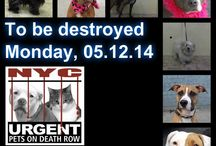 SUPER URGENT - DOGS IN NEED OF HELP!!! / They don't have too much time before they get on the death row list, please share them everywhere!!! If you can adopt, rescue, sponsor, donate so that they could enjoy the rest of their lives!!! Thanks so much!!!!!