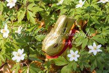 Oster Fotosession / Stockfotos für Ostern