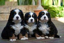 schatje puppy