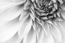 Art / botanical photo B&W
