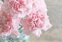 carnation wedding / by Barb Augustynowicz