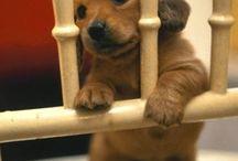 Sooooooooooooo Cute!! / Cute and adorable puppies and dogs