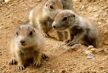 Animals: small and furry