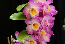 Dendrobiumfélék