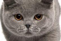 Koty- rasy