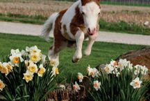 Young Foals Jumping Like Pros!