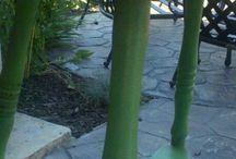 Chalk Paint®-Antibes Green