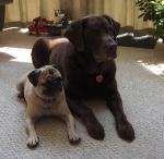 Doggie treats / by Christopher Kimberly Fleenor Cookson