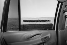 Photographer-Lee Friedlander