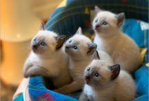 cat cuteness / by Denise Adams