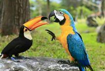 Papoušci, kanárci