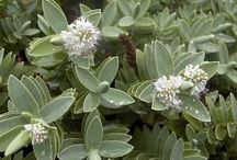 Plant pics