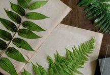 Ferns*