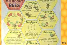 Pre K Bee unit
