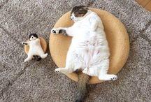 cats-mačičky