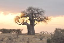 Wanderlust...Tanzania / Why do I travel...because I have to, I have an obsession with seeing the world