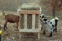 Goats Again! / Natural goat dream board. / by Sandy W