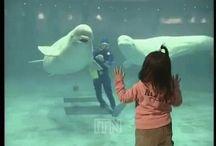 en acuarios en movimiento