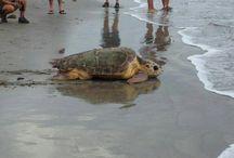 Animals of Galveston island