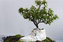 zapatos intervención