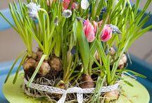 spring bulb arrangements / by Cathy Walackas Estey