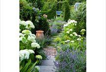 Narrow Shaped Garden
