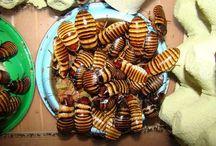 švábi