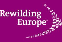 """Rewilding Europe / Images and videos about the amazing project Rewilding Europe. Biosphaera works with Parco nattura Viva who is one of the italian parner of the european project. """"Rewilding ensures natural processes ... Rewildng provide opportunity for modern society to reconnect with such wilder places for the benefit of all life"""""""