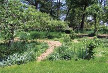 my new project / permaculture/food forest / by chix shabby mama