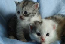 Cute Animals *-*