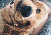 Cute dogs // Animals