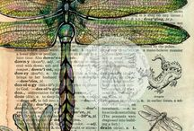 Dragonflies and beetles