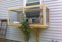 strutture per gatti