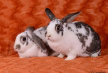 Other Bunny Rescues / Here are other adoptable bunnies from around the web