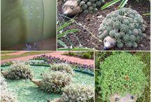 Zahrada / kytičky
