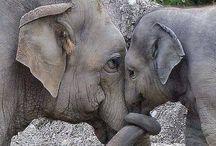 Mor og barn i dyreverden