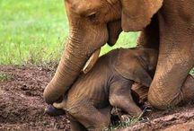 slonč