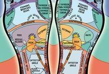 réfléxologie corps humain
