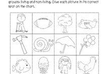 kindergarten living and non living