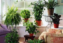 Home: Plants / by Pattie Bialecki Barnes