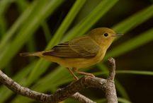 birdsip.xyz / Bird Gallery, Bird Wallpaper HD, Bird Photos, Bird Wallpapers, Bird Pictures, Bird Image