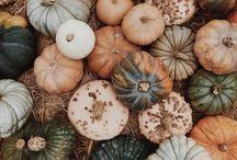 Pumpkins♡|Foxtail