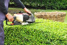 Mowingplus / We pride ourselves in offering quality, professional, and dependable lawn mowing Dural