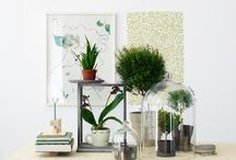 Plants / by Kristin Casaletto - Wood & Paper Co.