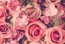 beleza das flores