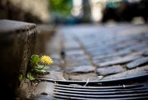 Sewers / Het riool is een bijzonder gangestelstel waar je vaak geen beeld bij hebt of wilt hebben. Hier toch een verzameling bijzonder foto's.