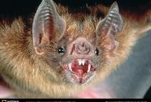 Bats for school project